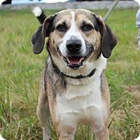 Adopt A Pet :: Freddie- URGENT - Providence, RI
