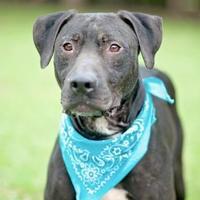 Adopt A Pet :: Emerson - Lafayette, LA