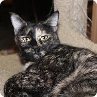 Adopt A Pet :: STARLIGHT - Cypress, TX