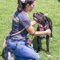 Adopt A Pet :: Bronson/Orzo - Palm Springs, CA