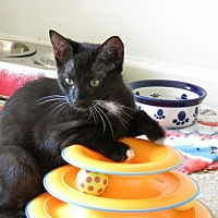 Adopt A Pet :: Prince George - Harrisburg, PA