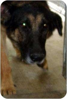 German Shepherd Dog Dog for adoption in Mt. Vernon, Illinois - Bernice