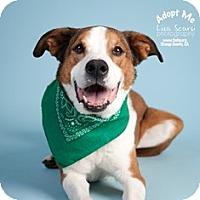 Adopt A Pet :: Toby - Tustin, CA