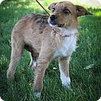 Adopt A Pet :: TSETSEfly - Broomfield, CO