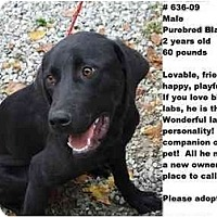 Adopt A Pet :: # 636-09 - ADOPTED! - Zanesville, OH