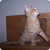 Adopt A Pet :: K-Lillian9-Garhett - Colorado Springs, CO