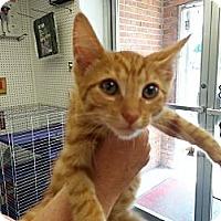 Adopt A Pet :: Tigger - Mount Laurel, NJ