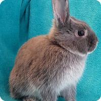 Adopt A Pet :: Cinderella - Los Angeles, CA