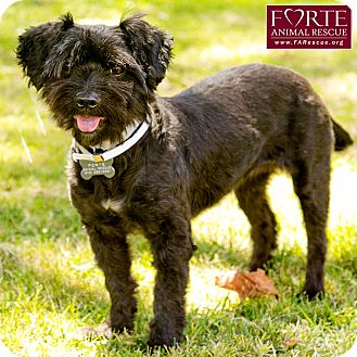 Terrier (Unknown Type, Small) Mix Dog for adoption in Marina del Rey, California - Princess