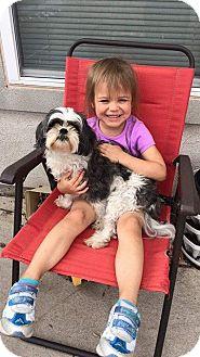 Shih Tzu Dog for adoption in El Paso, Texas - Baxter