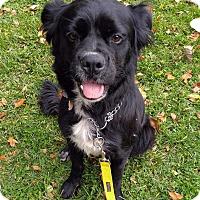 Adopt A Pet :: Miracle-Adopted! - Detroit, MI