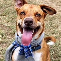 Adopt A Pet :: Romeo - Jesup, GA