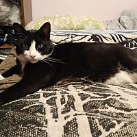 Adopt A Pet :: Henry - Monrovia, CA