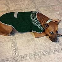 Adopt A Pet :: Piggy - New Philadelphia, OH