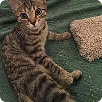 Adopt A Pet :: Tabitha - Philadelphia, PA