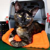 Adopt A Pet :: Mylie - Belleville, MI