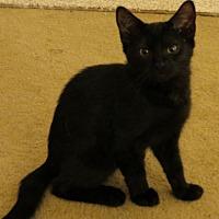 Adopt A Pet :: Princess Diana - Harrisburg, PA