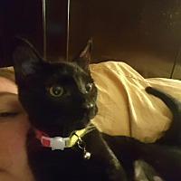 Adopt A Pet :: Ashley - Hampton, VA