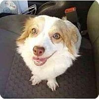 Adopt A Pet :: Princess - Kingwood, TX