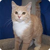 Adopt A Pet :: K-Yvonne1-Tasha - Colorado Springs, CO