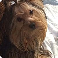 Adopt A Pet :: Duncan - New York, NY