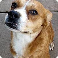 Adopt A Pet :: Trixie - Oakley, CA