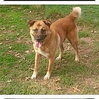Adopt A Pet :: PETEY - Waterbury, CT