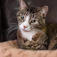 Adopt A Pet :: Starla - Stafford, VA