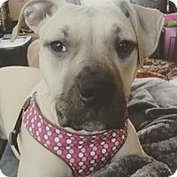 Adopt A Pet :: Sasha! - Sacramento, CA