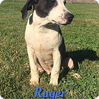 Adopt A Pet :: Ruger - Cheney, KS