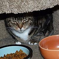 Adopt A Pet :: Foxy - Stafford, VA