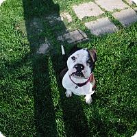 Adopt A Pet :: MAXINE - Sandusky, OH