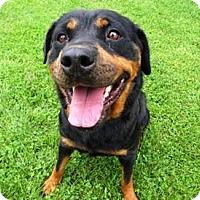 Adopt A Pet :: Agnes - Belleville, MI