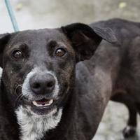 Adopt A Pet :: Ariana - Terre Haute, IN