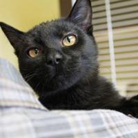 Adopt A Pet :: Fiona - McCall, ID