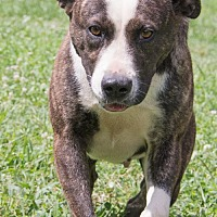 Adopt A Pet :: Dora - Midlothian, VA