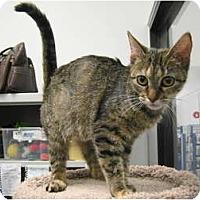 Adopt A Pet :: Nakoma - Warminster, PA