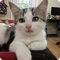 Adopt A Pet :: Piper - Monroe, GA