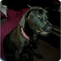Adopt A Pet :: Otis - New Boston, NH