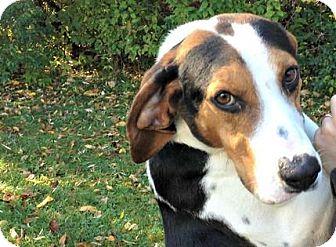 Hound (Unknown Type) Mix Dog for adoption in Mt. Pleasant, Michigan - Boone