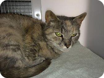 Domestic Shorthair Cat for adoption in Cumming, Georgia - Mollee
