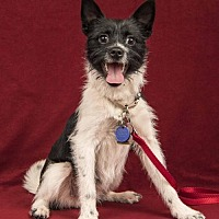 Adopt A Pet :: Arfie - Davis, CA