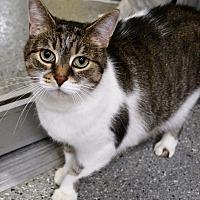 Adopt A Pet :: Georgia - Michigan City, IN