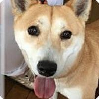 Adopt A Pet :: Stephanie - Deer Park, NY