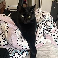 Adopt A Pet :: Camila - Hampton, VA