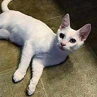 Adopt A Pet :: Casper - Salisbury, NC