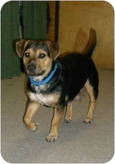Beagle Mix Dog for adoption in Chester, Maryland - Gypsy