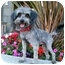 Photo 3 - Lhasa Apso/Poodle (Miniature) Mix Dog for adoption in Los Angeles, California - QUENTIN