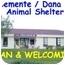 Photo 3 - Dalmatian/Labrador Retriever Mix Dog for adoption in San Clemente, California - SPARKY