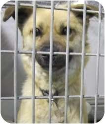 Shepherd (Unknown Type) Mix Dog for adoption in Olathe, Kansas - Saralee